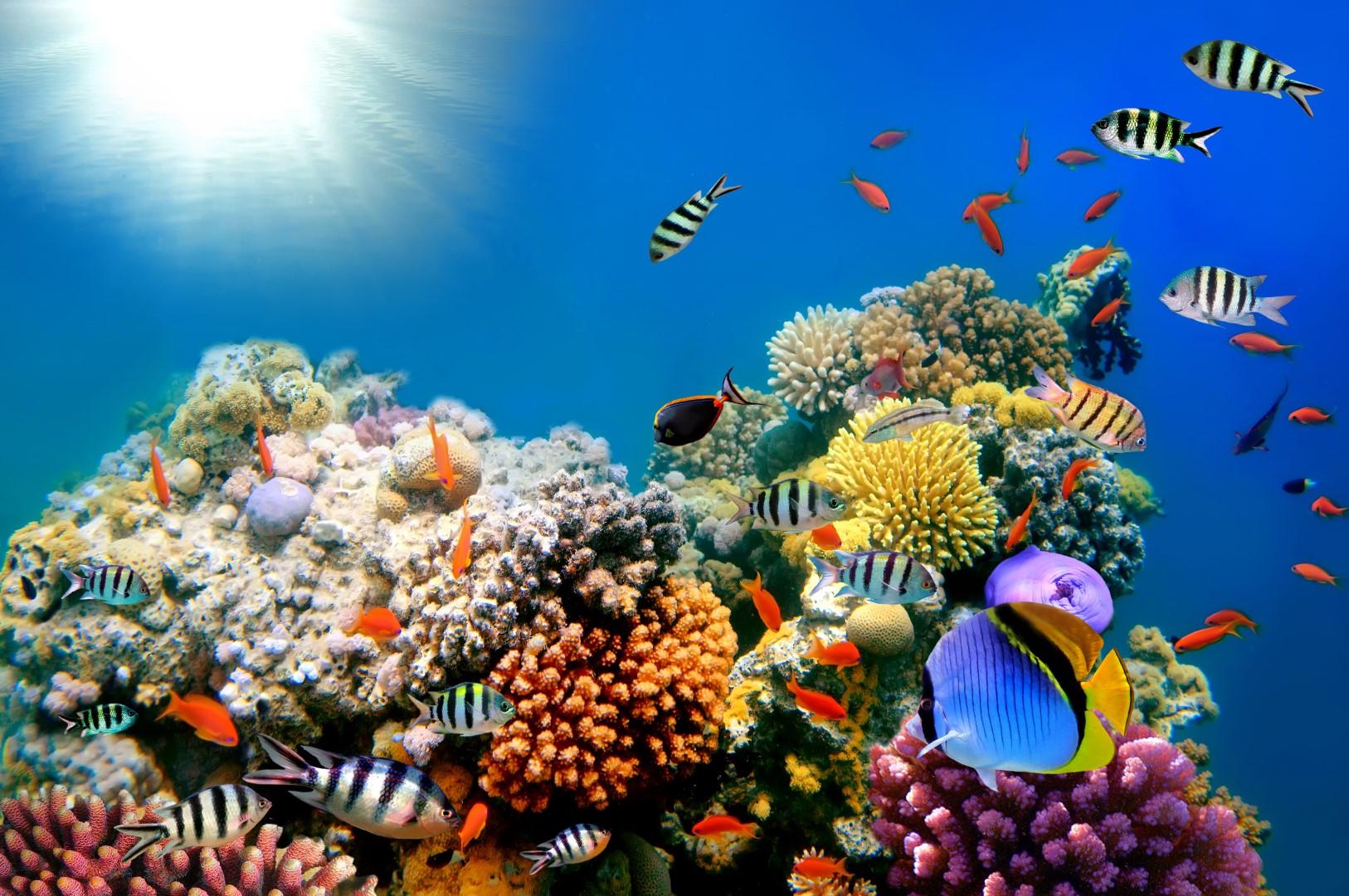 Сред дълбините на океана