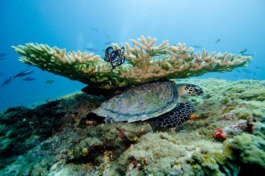 Почивка на Малдиви през април 2021 с чартър, 6 нощувки